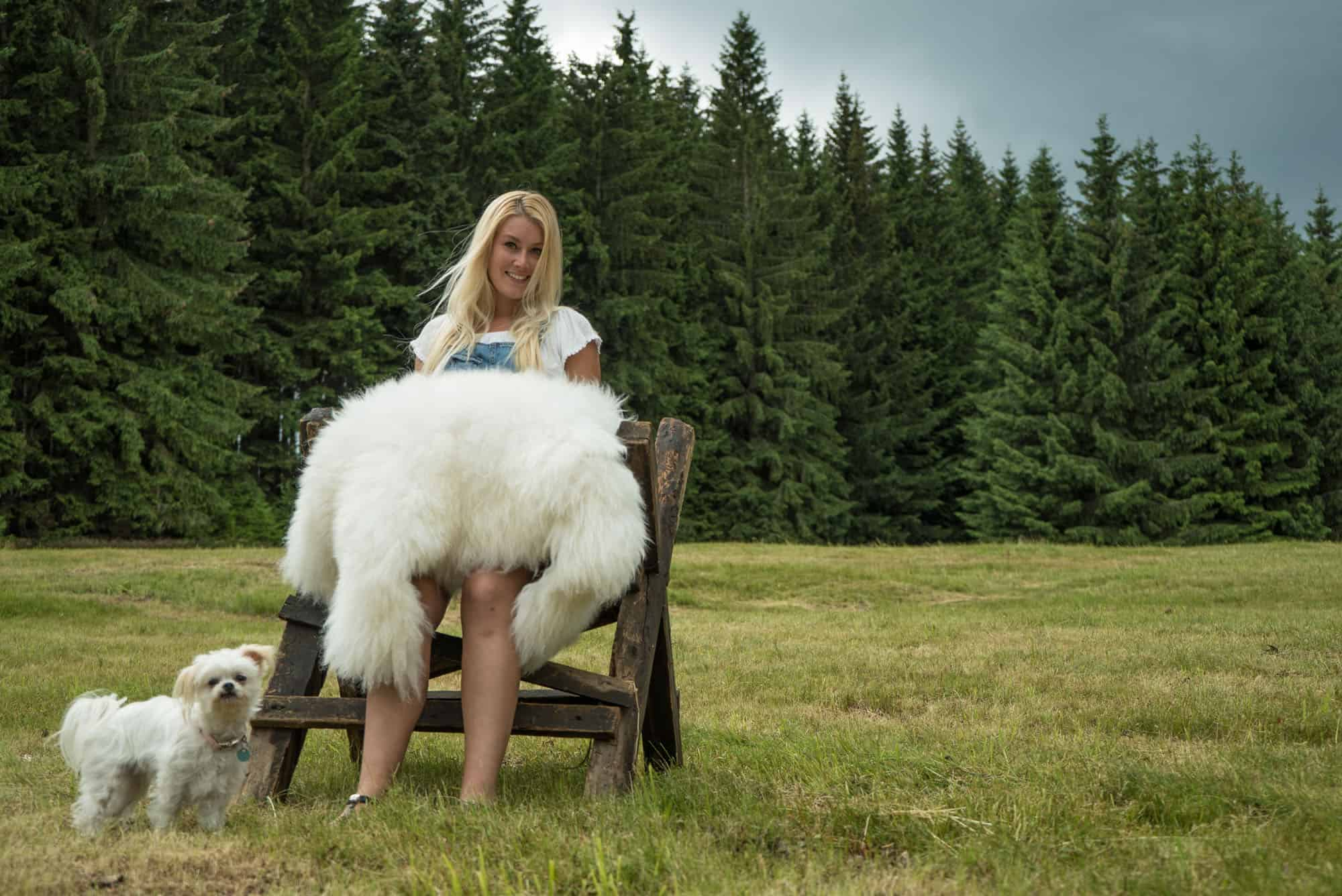 Sheepy.cc