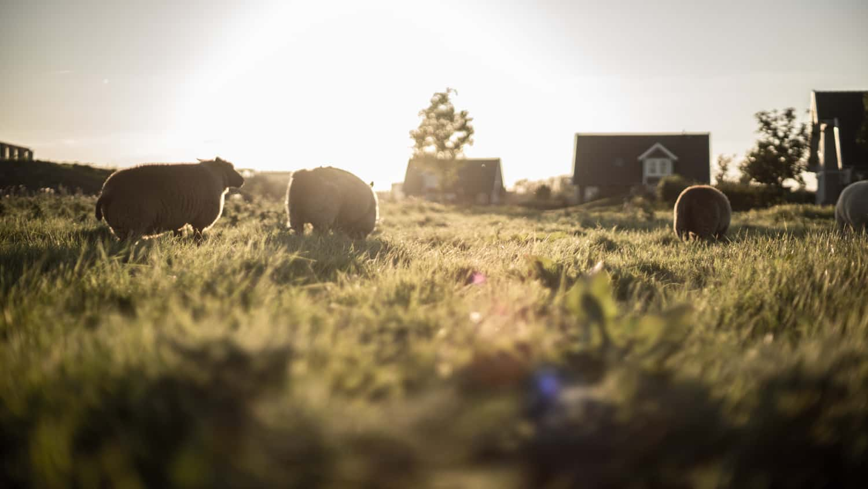 De 5 meest gestelde vragen over een schapenvacht