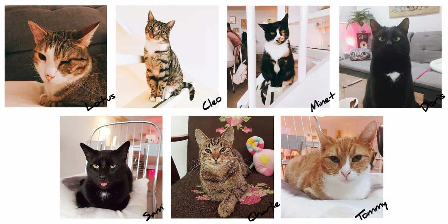 De-7-katten-van-kattencafé-poeslief-pdf