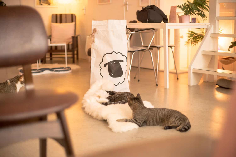 Schapenvacht en kat , Sheepy (2)