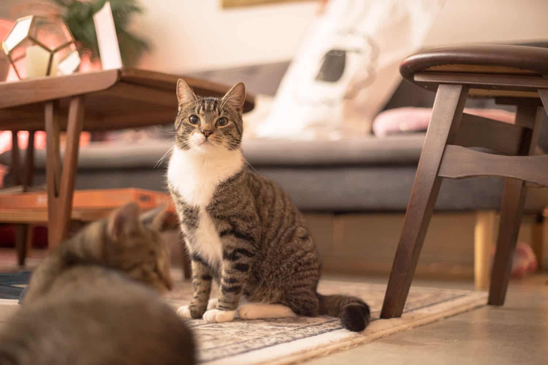 Schapenvacht en kat , Sheepy (24)